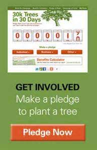 donate to plant a rainforest
